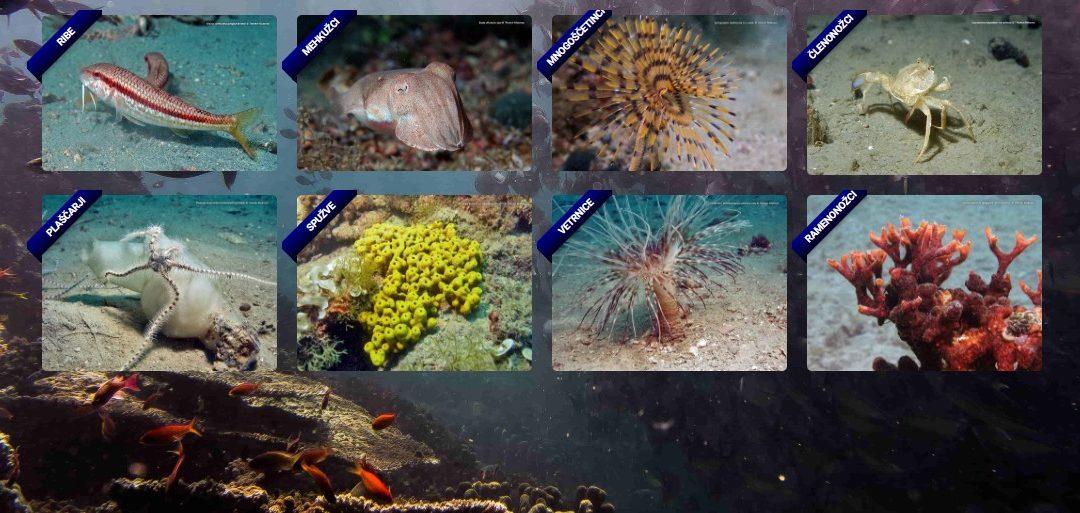 Škocjanski zatok in Akvarij Piran